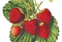 Fruits,  vegetables  / Gyümölcsök, zöldségek