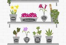 Houseplants / Szobanövények