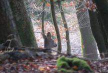 Jagd und Natur in Fischerbach/ Schwarzwald ; Hunting and nature impressions in Fischerbach / Blackforest