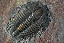 Rocks & Fossils / Geology, Rocks & Fossils