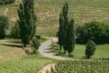 Beaujolais / Vins du beaujolais