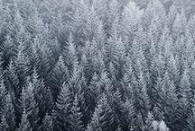 Xmas & winter. /