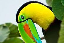 Birds #1 / Birds