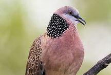.Birds #2 / Birds