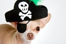 Chihuahuas in costumes