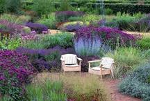 gardens / by Darlyn Reddy