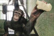Monkey World - Dorset / MonkeyWorld  Dorset @Steelasophical