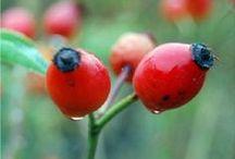 Βότανα και καλλιέργειες της Ελλάδας