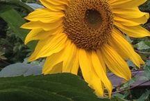 Geluk uit de tuin / Foto's uit eigen tuin