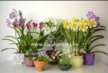3. Clay flowers - Agyagvirágok / Clay flower - Colors, shapes and sizes ... Agyagvirág - Színek, formák, méretek...