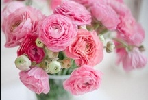 Beautiful Blossoms & Bouquets / A love of all things french, shabby and vintage with a touch of casual elegance.
