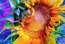 Sunflowers!!!! I love Sunflowers!!! Sunflowers!!!! / Always look towards the brighter side of life! Just like the sunflower which turns towards the sun!!! ~Author Unknown~ / by Sarah Crain