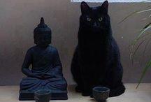 Yoga / Verzameling yoga gerelateerd