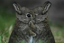 Nos amis les animaux / Tableau consacré à nos amis les #animaux