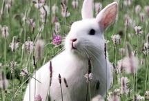 ....springtime....
