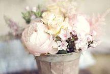 ... garden ...