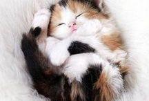 Kittens / Cute animals