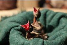 Ptaki / Birds / Większość ptaków przebywających w Ośrodku trafia z osłabienia. Jest rehabilitowana, a następnie trafia z powrotem na wolność.