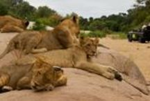 Travel   South Africa / by Kelly A
