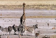 fotografování - zvířata