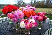 Highfields Gardens / Gardens in Maine / by Carol Hewitt