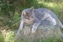 Blandat / Min katt Sidde