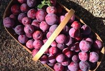 Preserving and enjoying the harvest