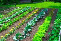 garden plottin'