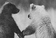 Bears & Polar Pals / by Ardith