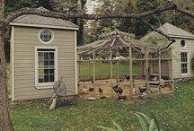 Raising Chickens & Bees