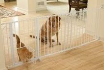 Cat vs. Dog / They fight like cats & dogs; or are loyal friends. Often, they are both within the same day. / by Ardith