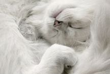 Cat - Nap / by Ardith