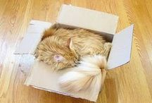 Cat - Box / by Ardith