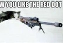 Cat - Red Dot / by Ardith