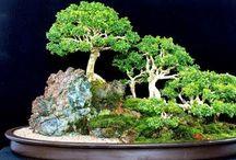 Bonsai Beautiful