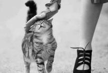 Cat - Love / by Ardith