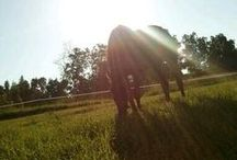 Horses / Their beauty amazes me / by Maddie