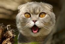 kitty.....here kitty kitty kitty