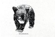 BEARS / Grrroooaaarrr