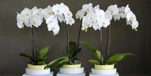 Orchids / #orchids