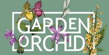 Garden Orchid / The exotic beauty of orchids in your own garden?  With the easy, frost-resistant Garden Orchid you can bring the tropics into your back garden.  Select the shape, colour and height you like most of this special family of garden orchids.  The easy and winterproof perennial Garden Orchid varieties brings your backyard . www.gardenorchid.com