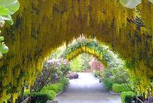 《 ~Gardens & Beautiful Flowers~ 》