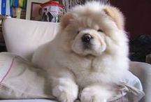 Chow Chow Love !!! / by Kathryn Williams