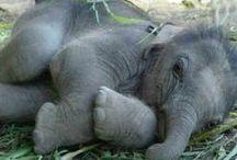 《 ~Animals & African Wildlife~ 》