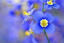 《 ~Yellow & Blue~ 》
