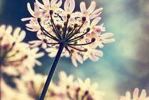 Photography - Nature & Landscapes / Landscapes & Flora