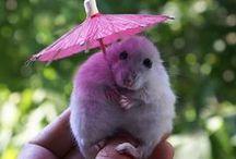 Cute animals - Animalitos