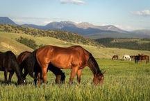 Summer on the Ranch