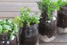 Jardinería, flores y plantas