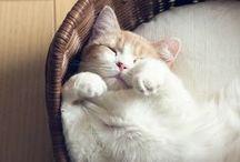 Cute cats - Gatetes bonicos